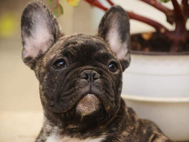Собака с сухим носом