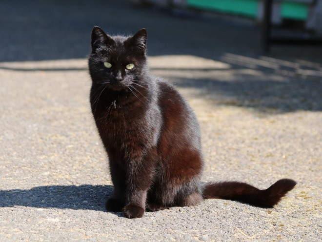 Кошка сидит греется на солнце