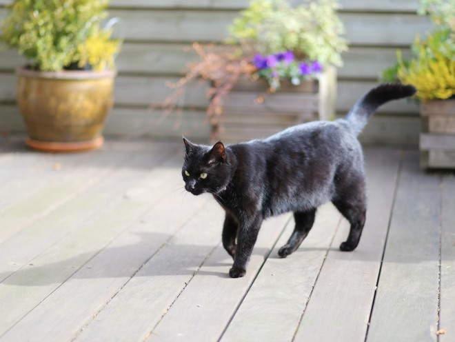 Кошка ходит на веранде