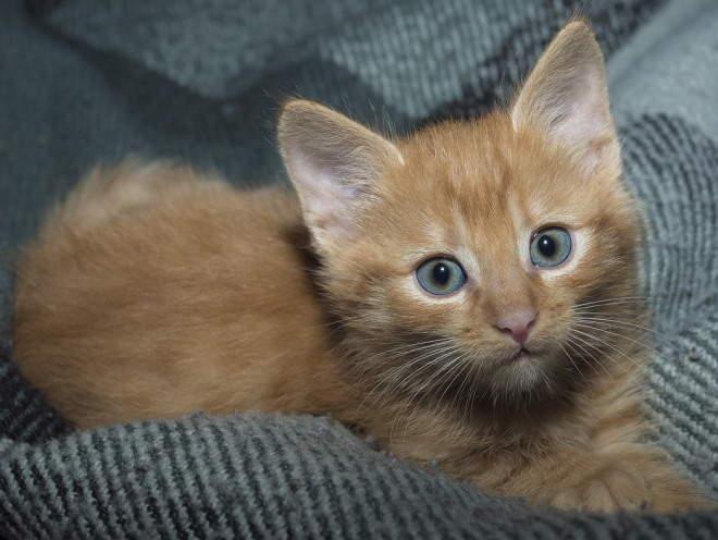 Котята врождённые заболевания суставов при вывихе плечевого сустава необходимо сразу же