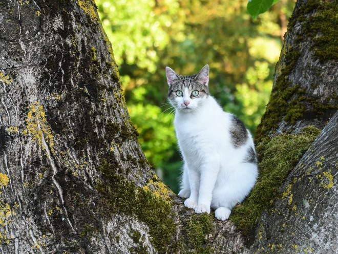 Кошка сидит на большом дереве