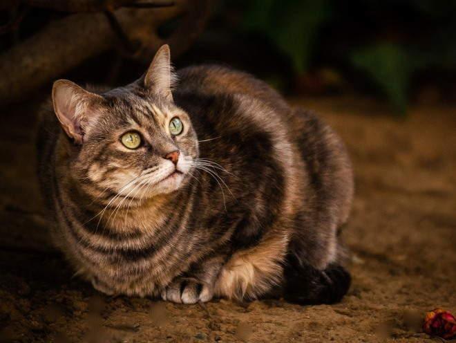 Кот смотрит с осторожностью