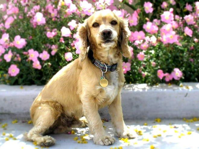 Собака сидит у цветника