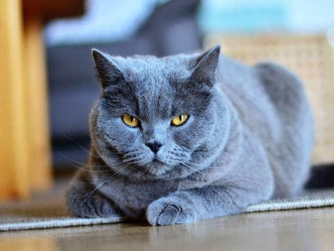 Кот лежит на полу в доме