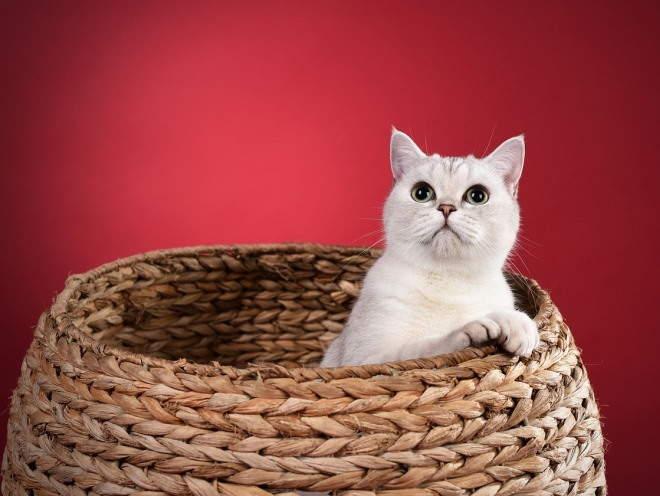 Кошка залезла в корзину