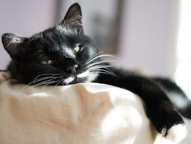 Кот лежит на диване