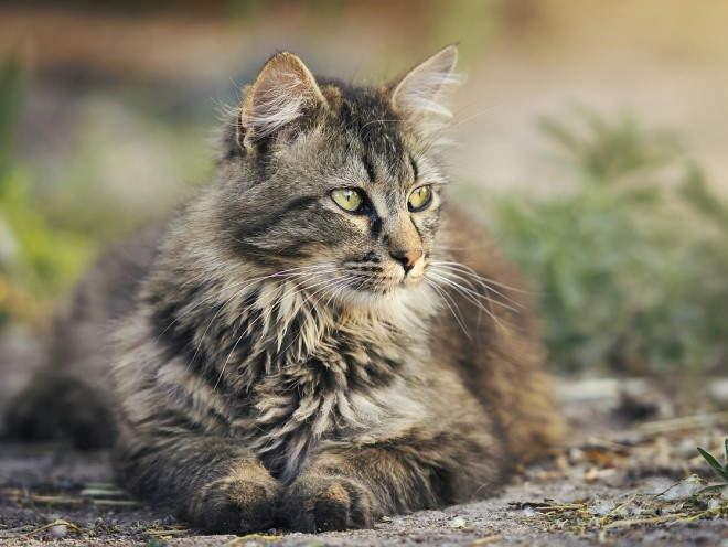 Кошка отдыхает на улице