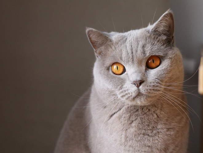 Кошка пристально смотрит