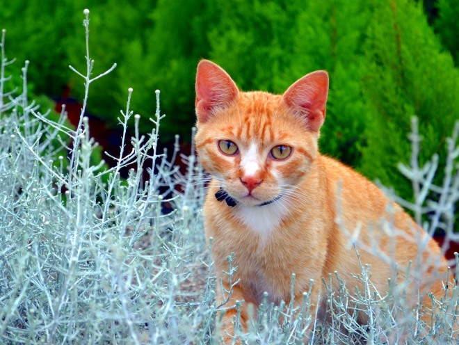 Кот гуляет среди зелени