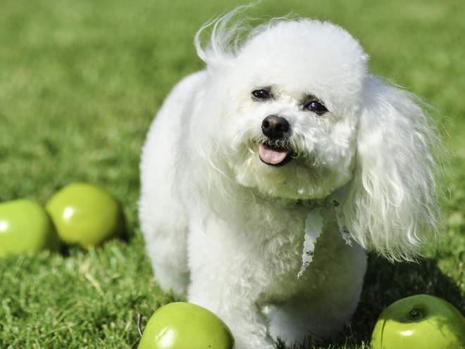 Собака нашла яблоки в саду