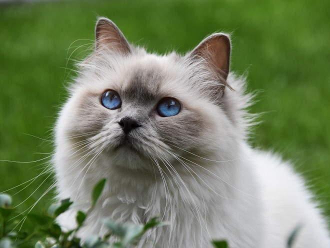 Кошка сидит у цветов