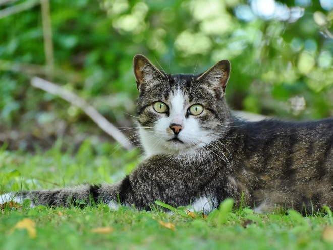 Кот растянулся на траве
