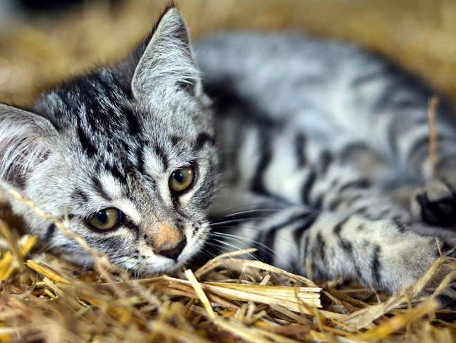 Котенок лежит на соломе свернувшись