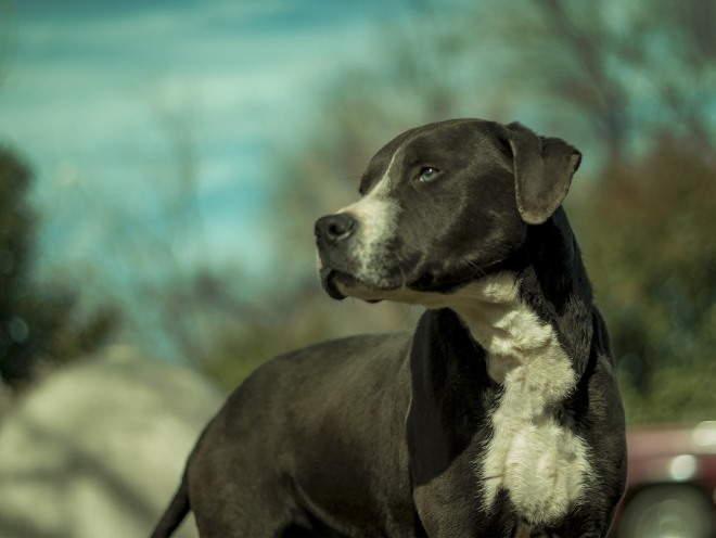 Компрессы охлаждающие суставы у собак настойки иотвары выводящие соли из суставов