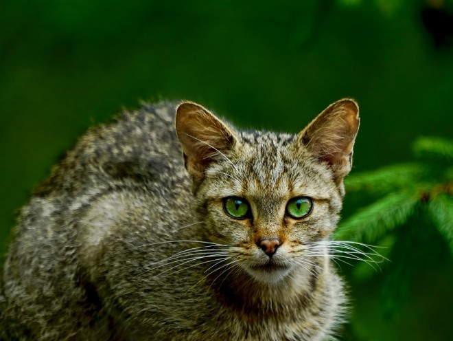 Кот в дикой природе