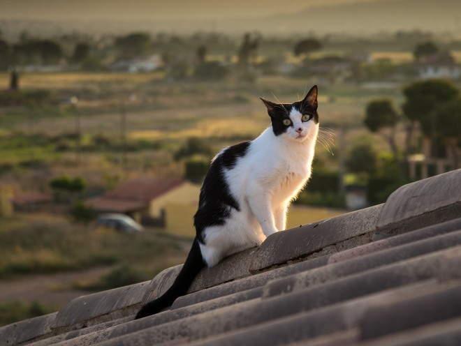 Кошка лазит по крыше