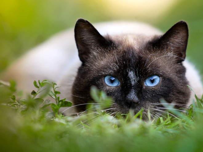 Кот затаился в траве