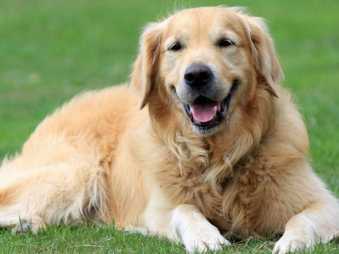 Собака отдыхает лежа на траве