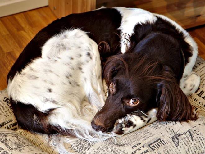 Собака отдыхает на лежанке