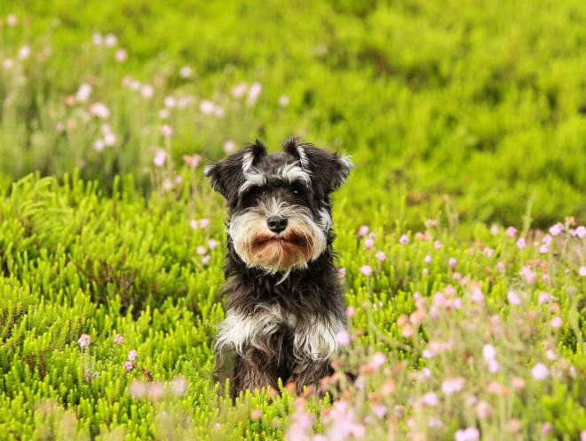 Собака гуляет среди зелени