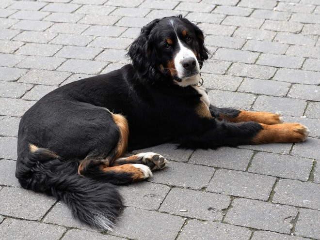 Собака лежит во дворе